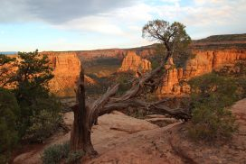 Colorado National Monument Grand Jucntion